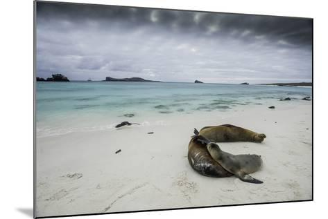 Galapagos Sea Lions Relaxing on the Beach-Jad Davenport-Mounted Photographic Print