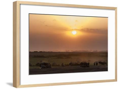 Wildebeest and Common Zebras, Equus Quagga, Grazing During Sunset-Sergio Pitamitz-Framed Art Print