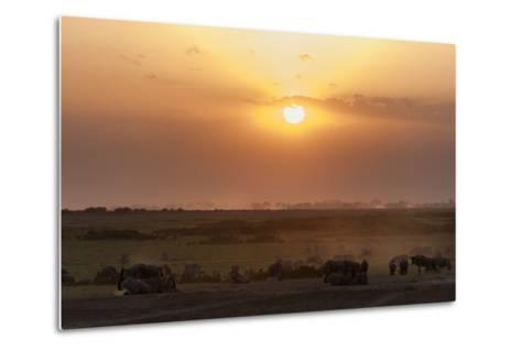 Wildebeest and Common Zebras, Equus Quagga, Grazing During Sunset-Sergio Pitamitz-Metal Print