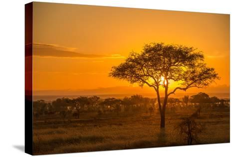 Sunset in Serengeti National Park-Tom Murphy-Stretched Canvas Print