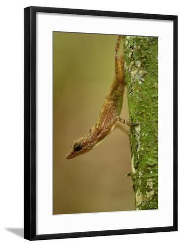 An Anole Lizard on Barro Colorado Island-Jonathan Kingston-Framed Art Print