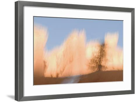 Trees in Bryce Canyon National Park-Philip Schermeister-Framed Art Print