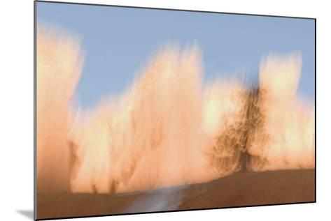 Trees in Bryce Canyon National Park-Philip Schermeister-Mounted Photographic Print