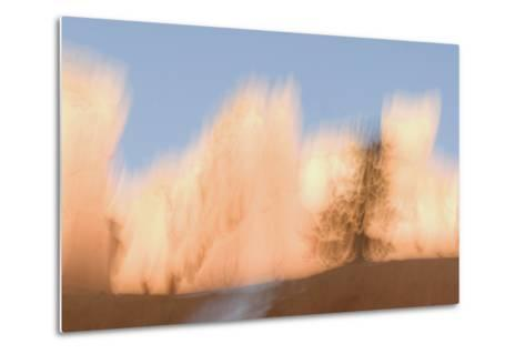 Trees in Bryce Canyon National Park-Philip Schermeister-Metal Print