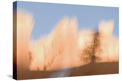 Trees in Bryce Canyon National Park-Philip Schermeister-Stretched Canvas Print