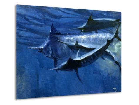 A Large Female Black Marlin Is Courted by Two Smaller Males Just Below the Surface-Mike Rivken-Metal Print