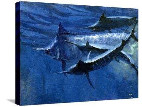 A Large Female Black Marlin Is Courted by Two Smaller Males Just Below the Surface-Mike Rivken-Stretched Canvas Print