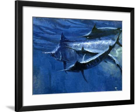 A Large Female Black Marlin Is Courted by Two Smaller Males Just Below the Surface-Mike Rivken-Framed Art Print