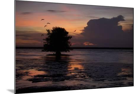 Scarlet Ibises Fly Through the Orange Sky at Sunset over Orinoco River Delta, Venezuela-Timothy Laman-Mounted Photographic Print