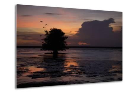 Scarlet Ibises Fly Through the Orange Sky at Sunset over Orinoco River Delta, Venezuela-Timothy Laman-Metal Print