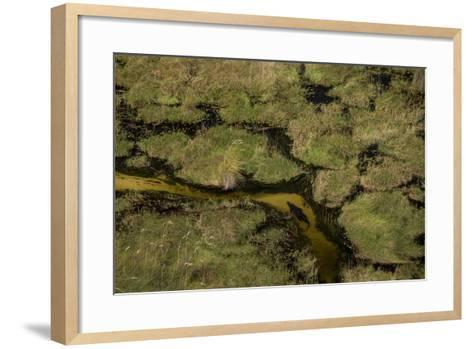 A Crocodile, Crocodylinae, Swimming Through a Small Canal in the Wetlands-Beverly Joubert-Framed Art Print