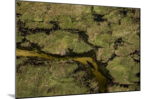 A Crocodile, Crocodylinae, Swimming Through a Small Canal in the Wetlands-Beverly Joubert-Mounted Photographic Print