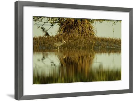 A Little Blue Heron Forages Underneath a Mangrove Tree in the Orinoco River Delta-Timothy Laman-Framed Art Print