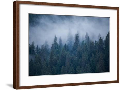Morning Fog Rises Off of a Spruce, Picea, Forest in Alaska's Inside Passage-Erika Skogg-Framed Art Print