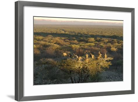 Large Group of Vultures Perched in a Tree Overlooking the Waterberg Plateau, Namibia-Anne Keiser-Framed Art Print