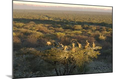Large Group of Vultures Perched in a Tree Overlooking the Waterberg Plateau, Namibia-Anne Keiser-Mounted Photographic Print