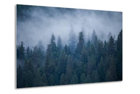 Morning Fog Rises Off of a Spruce, Picea, Forest in Alaska's Inside Passage-Erika Skogg-Metal Print