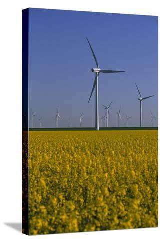 Windmill Park in Blooming Rape Field-Norbert Rosing-Stretched Canvas Print