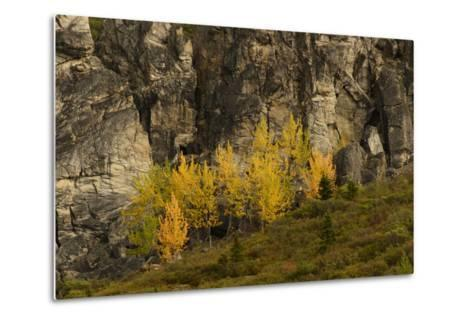 Fall Foliage in Denali National Park, Alaska-Charles Smith-Metal Print
