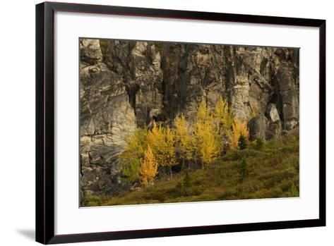 Fall Foliage in Denali National Park, Alaska-Charles Smith-Framed Art Print