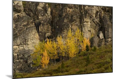 Fall Foliage in Denali National Park, Alaska-Charles Smith-Mounted Photographic Print