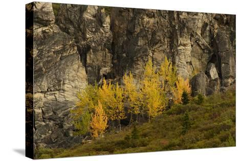 Fall Foliage in Denali National Park, Alaska-Charles Smith-Stretched Canvas Print