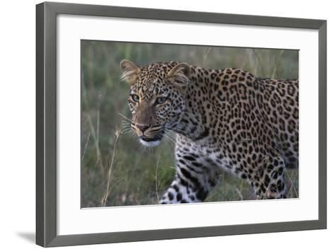 Portrait of a Leopard, Panthera Pardus, with Green Eyes at Dusk-Sergio Pitamitz-Framed Art Print