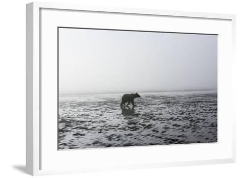 Brown Bear, Ursus Arctos, at Silver Salmon Creek Lodge in Lake Clark National Park-Charles Smith-Framed Art Print