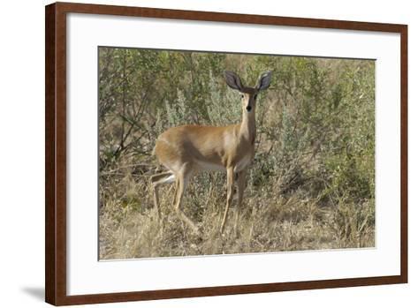 Impala, Upper Vumbura Plains, Botswana-Anne Keiser-Framed Art Print