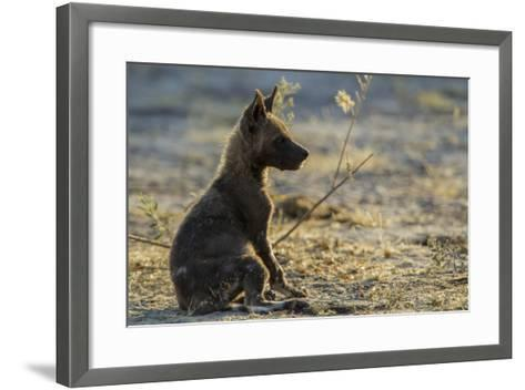 An African Wild Dog, Lycaon Pictus, Pup Sitting at Sunset-Beverly Joubert-Framed Art Print