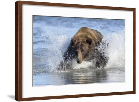 Brown Bear Fishing at Silver Salmon Creek Lodge in Lake Clark National Park-Charles Smith-Framed Art Print