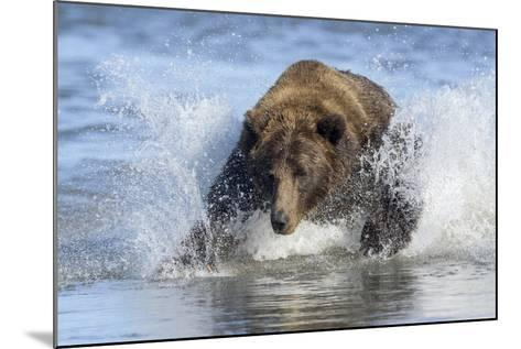 Brown Bear Fishing at Silver Salmon Creek Lodge in Lake Clark National Park-Charles Smith-Mounted Photographic Print