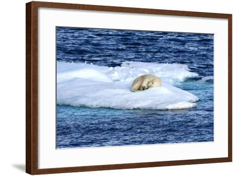 Polar Bear, Ursus Maritimus, Sleeping on Iceberg-Raul Touzon-Framed Art Print
