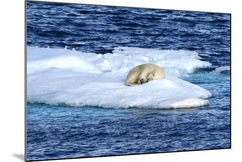 Polar Bear, Ursus Maritimus, Sleeping on Iceberg-Raul Touzon-Mounted Photographic Print
