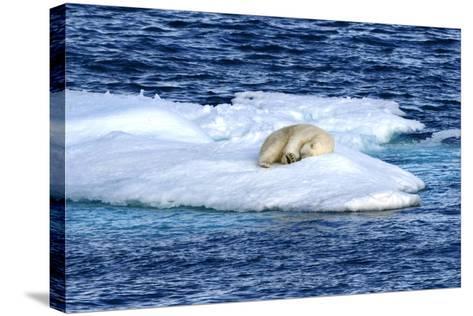 Polar Bear, Ursus Maritimus, Sleeping on Iceberg-Raul Touzon-Stretched Canvas Print