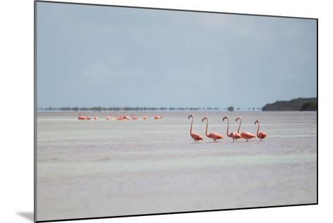 Pink American Flamingo Habitat at the Flamingo Salt Pond, Turks and Caicos-Mike Theiss-Mounted Photographic Print