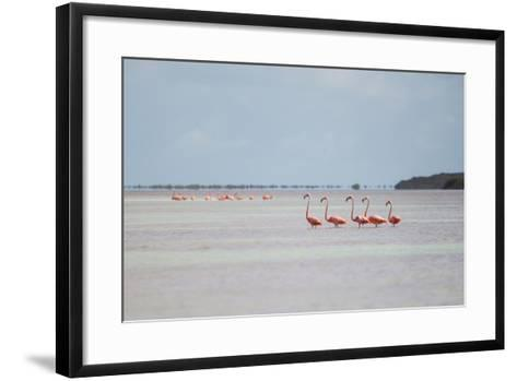 Pink American Flamingo Habitat at the Flamingo Salt Pond, Turks and Caicos-Mike Theiss-Framed Art Print