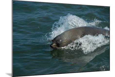 Cape Fur Seal in the Sea, Swakopmund Town, Namibia-Anne Keiser-Mounted Photographic Print
