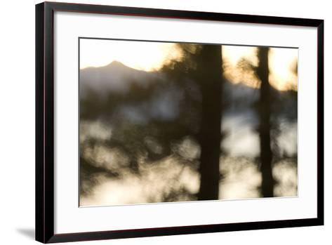 Abstract of Trees in Front of Crater Lake in Crater Lake National Park, Oregon-Philip Schermeister-Framed Art Print