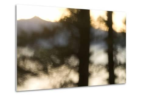 Abstract of Trees in Front of Crater Lake in Crater Lake National Park, Oregon-Philip Schermeister-Metal Print