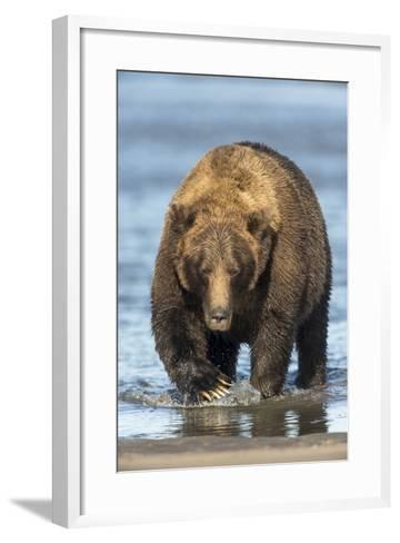 Brown Bear Wading in Water at Silver Salmon Creek Lodge in Lake Clark National Park-Charles Smith-Framed Art Print