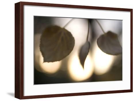 Close-Up of Aspen Leaves in Autumn in the Mono Basin National Forest Scenic Area-Philip Schermeister-Framed Art Print