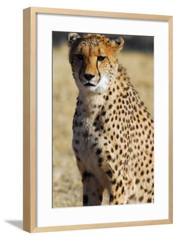 Close-Up of a Cheetah, the Cheetah Conservation Fund, Namibia-Anne Keiser-Framed Art Print
