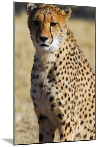 Close-Up of a Cheetah, the Cheetah Conservation Fund, Namibia-Anne Keiser-Mounted Photographic Print