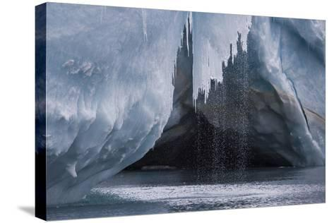 Water Pours Off a Glacier on the Edge of Dundee Island-David Griffin-Stretched Canvas Print