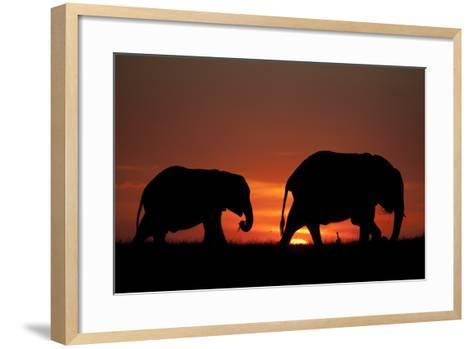 The Silhouette of Two African Elephants Grazing Against Dramatic Sky During Sunset-Beverly Joubert-Framed Art Print