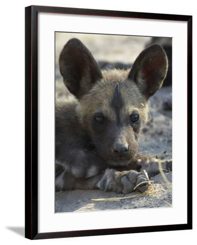A Close-Up of an African Wild Dog Pup, Lycaon Pictus-Beverly Joubert-Framed Art Print