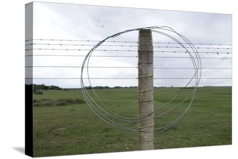 Coiled Barb Wire on a Fence Post-Tyrone Turner-Stretched Canvas Print