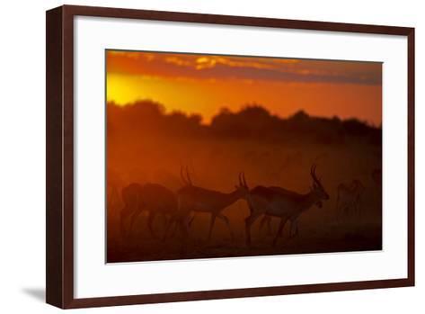 Silhouette of Lechwe, Kobus Leche, in the Early Morning Light-Beverly Joubert-Framed Art Print