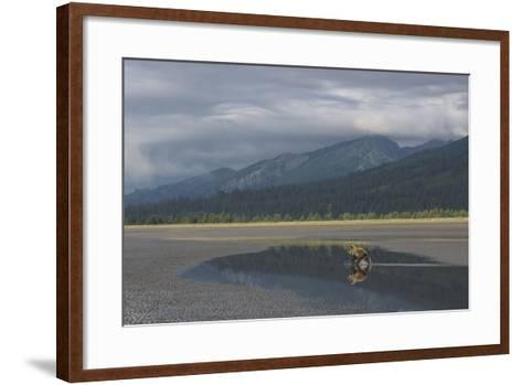 Brown Bear, Ursus Arctos, at Silver Salmon Creek Lodge in Lake Clark National Park-Charles Smith-Framed Art Print